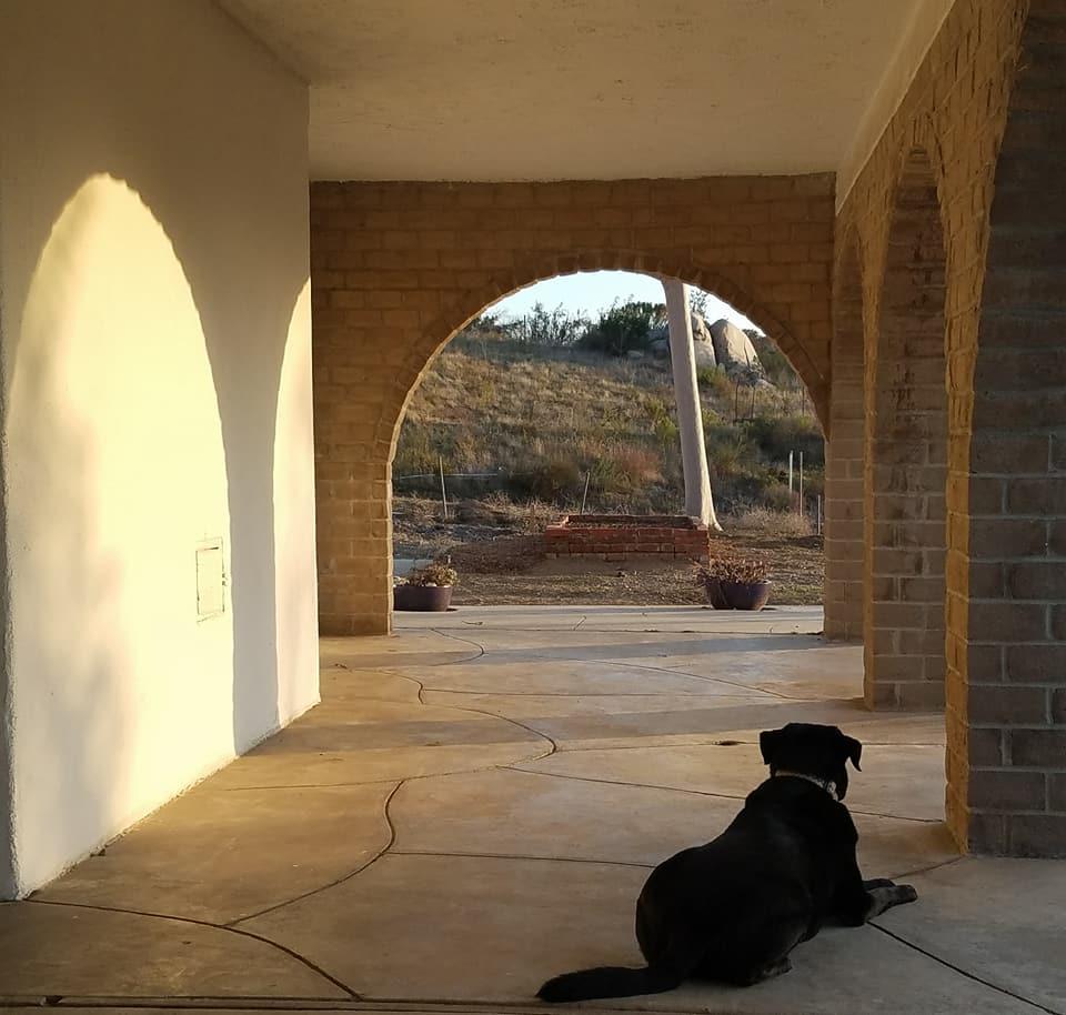 Studio Dog in Anticipation